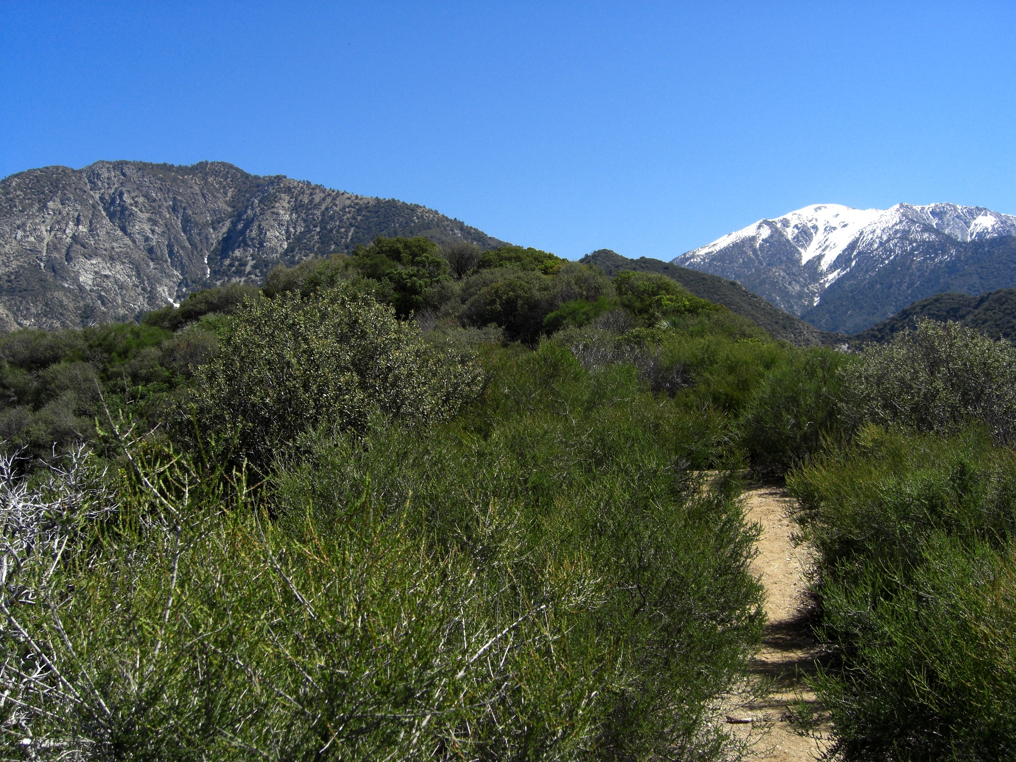 Near our lunch spot - views of Iron Mountain and Mt. Baldy.