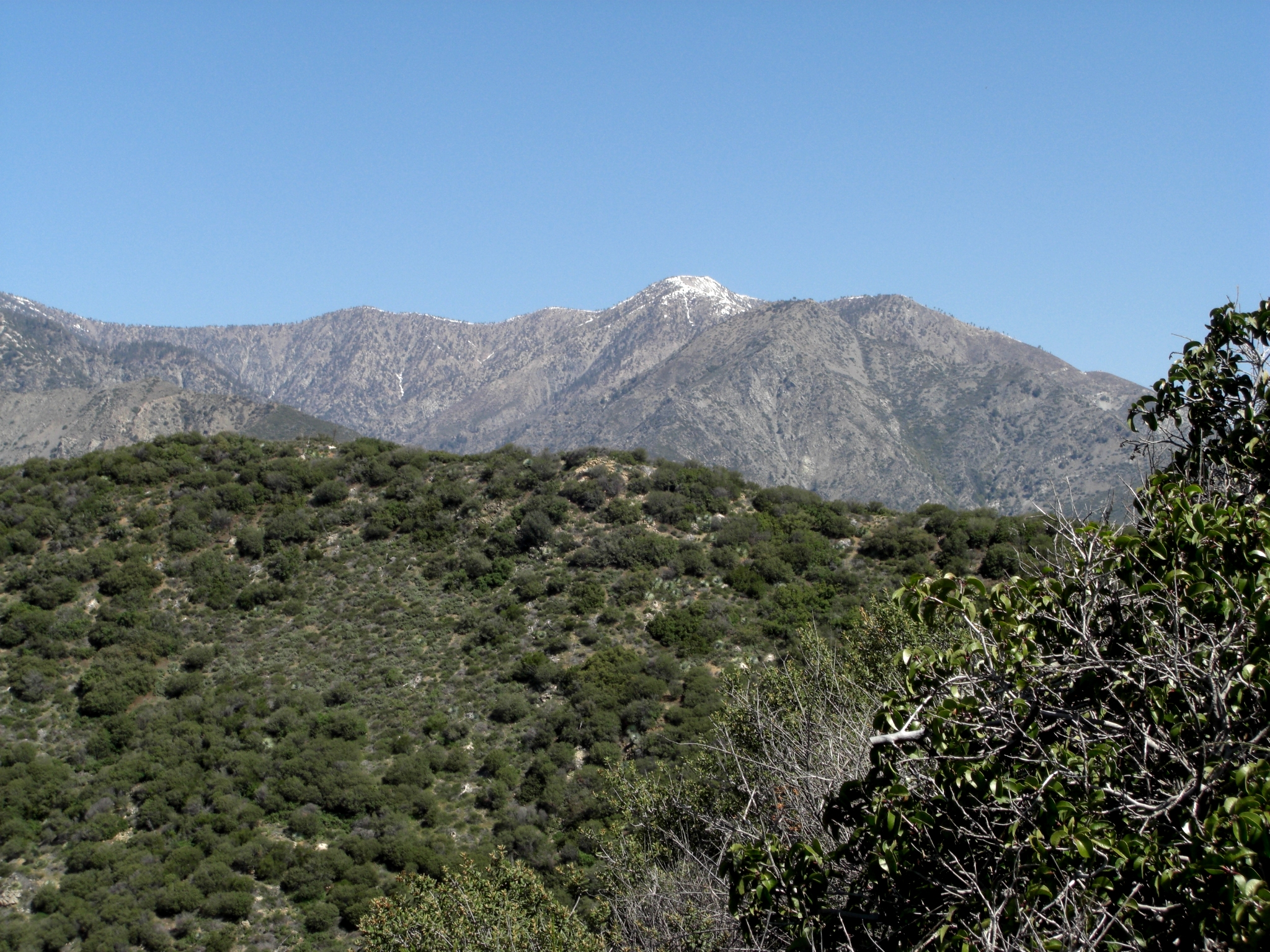 View of Mt. Baden-Powell, which we bagged last year! It's so fun to see peaks we've climbed to from a different perspective.