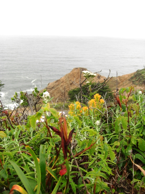 Gray Whale Cove Bluff Trail Wildflowers