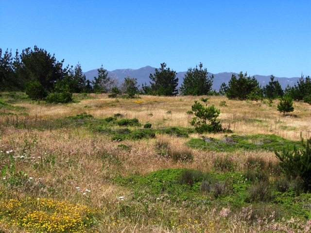 Moss Beach Land Preserve is all about open space.