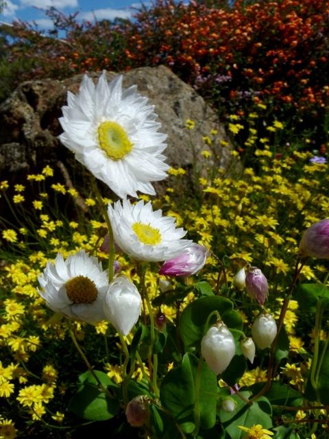 Flowers in Kings Park
