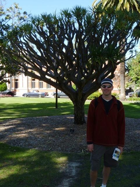 Emmett and the elephant tree