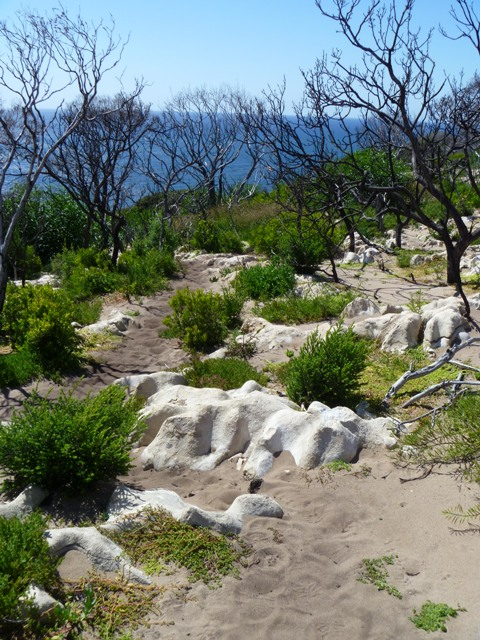Cape Naturaliste Trail