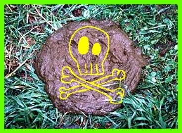 Cow poop bad!