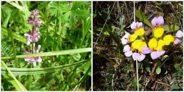 Pretty mystery flowers