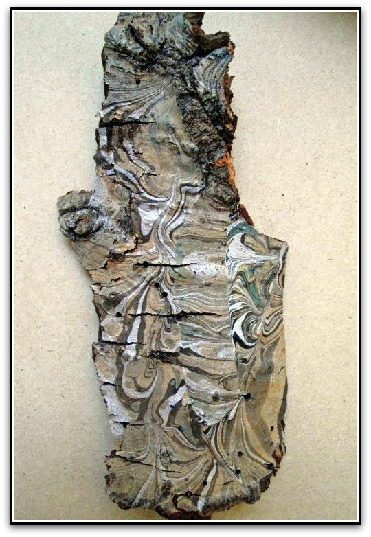 Marbled Bark by Steve